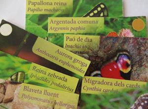 Papilio3